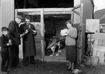 Heating lamps for the chickens, 28 February 1956